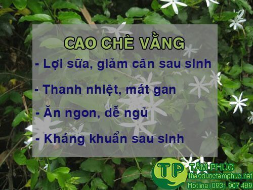 http://thaoduoctamphuc.net/wp-content/uploads/2018/07/cong-dung-cua-cao-la-vang.jpg